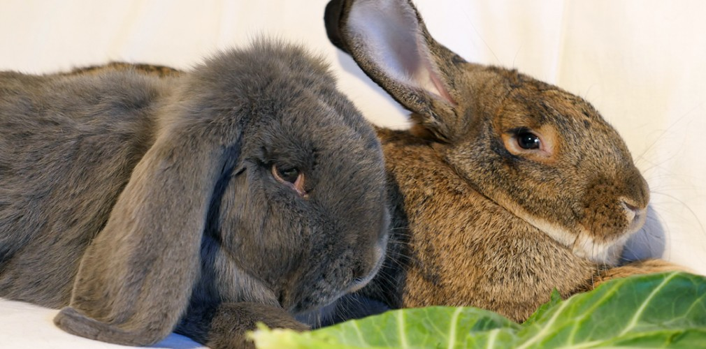 Fritz and Gigi - Residents at Bunny Burrows