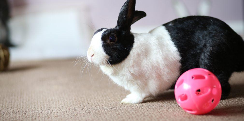 Hans - Resident at Bunny Burrows