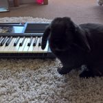 Gretel-ebay-keyboard