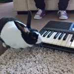 Hans-ebay-keyboard