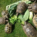 Hungry Tortoises