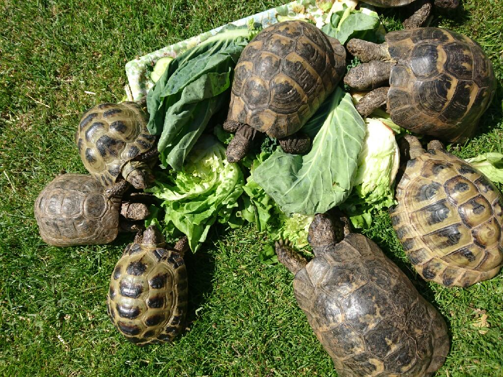 Nice Weather for Tortoises