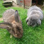 Fritz and Gigi