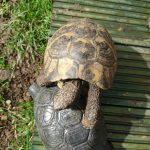 Tortoise misbehaving