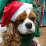 Fliss at Santa Paws Fund Raiser