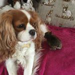 Wild Baby Bunny meets Fliss