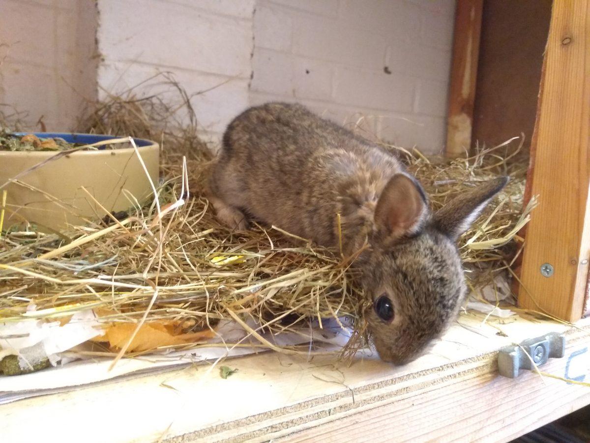 Baby Wild Bunny Update