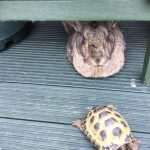 Fritz and Tortoise