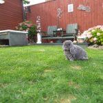 Gigi in the garden